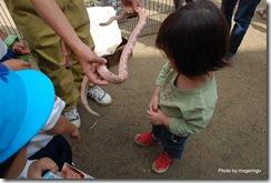 幼稚園に来た移動動物園にて